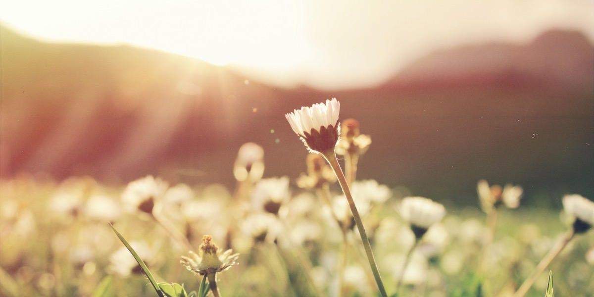 mil-flores